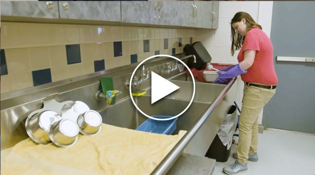 woman standing at a utility sink inside Allen Animal Shelter