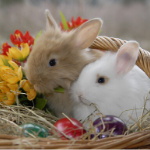 Two bunnies in an Easter Basket with painted eggs.