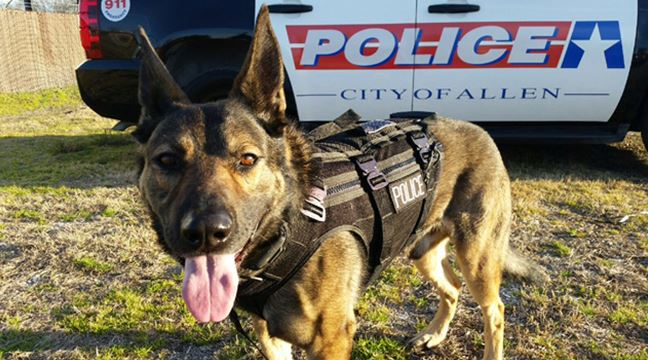 Allen Police K-9 wearing vest posed in front of police vehicle