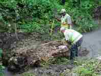 two workers clearing tree debris