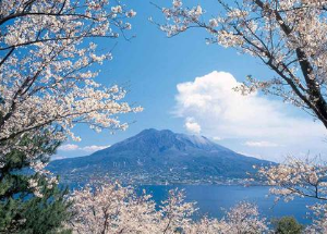 Photo: A volcano on the island of Kyushu, Japan with cherry blossoms in the foreground.