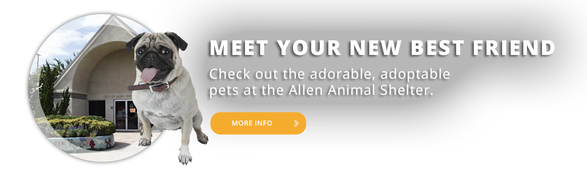 Adopt a Pet from the Allen Animal Shelter